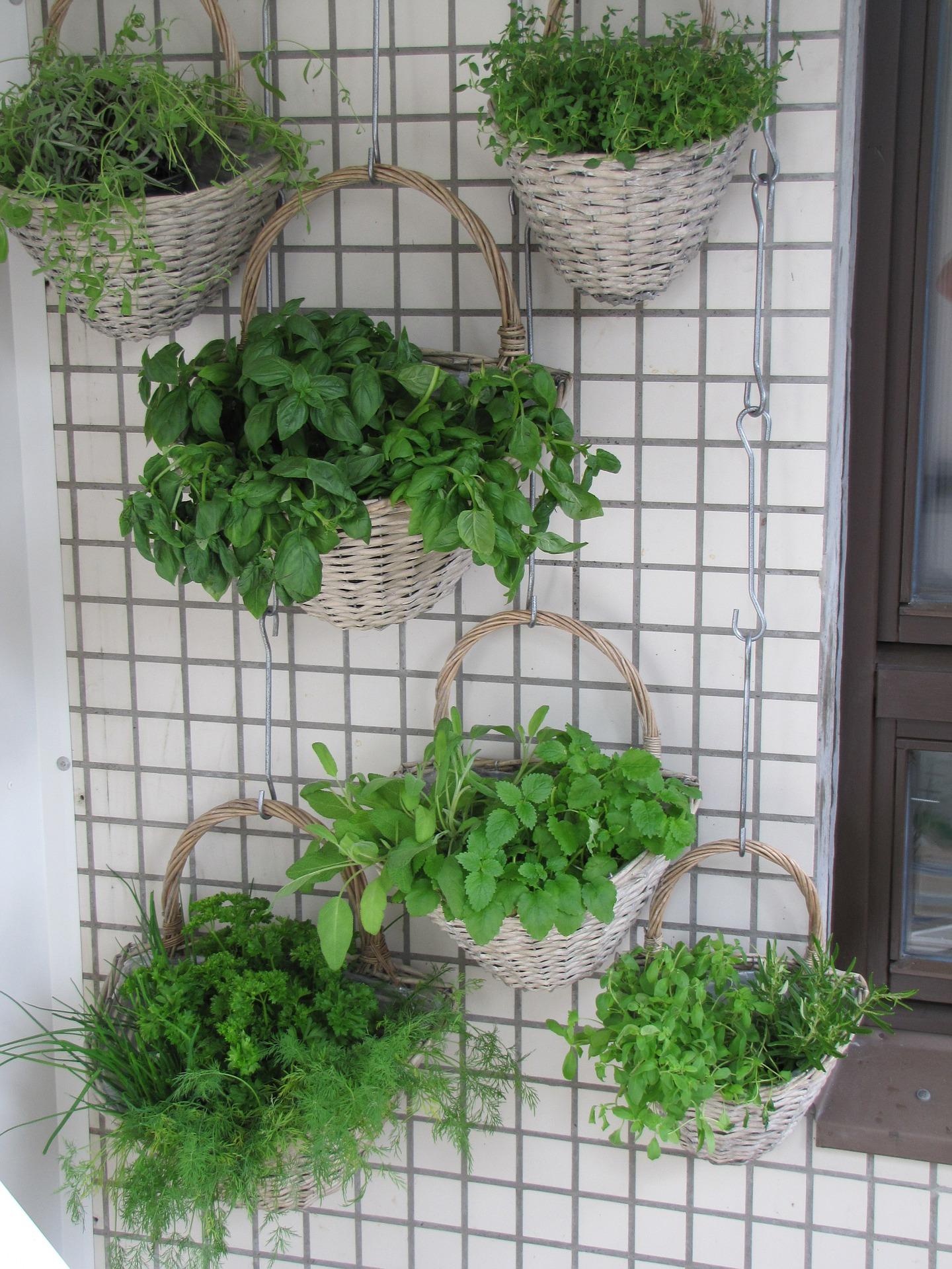 Садоводство, дача / ягоды,фрукты,овощи, зелень и травы;специ.